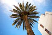 Palm tree — Stockfoto