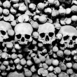 Skulls and bones - Stock Photo