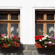 Windows with flowers — Stock Photo