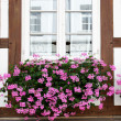 Window with flowers — Stock Photo #14717693