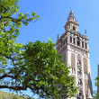Giralda - Stock Photo