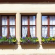 Stock Photo: Windows with flowers