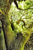 Moss-covered tree — Stock Photo