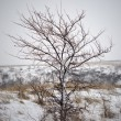 Tree in winter. — Stock Photo