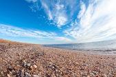 Shelly beach. — Zdjęcie stockowe
