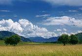 Field of summer grass — Stock Photo
