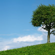 One tree in field - Foto Stock