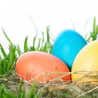 Easter color eggs in nest on green grass — Stock Photo #40475727