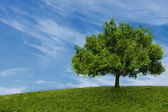 One tree in  field — Stock Photo