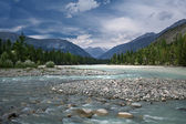 Mountain river in Altay — Stock Photo