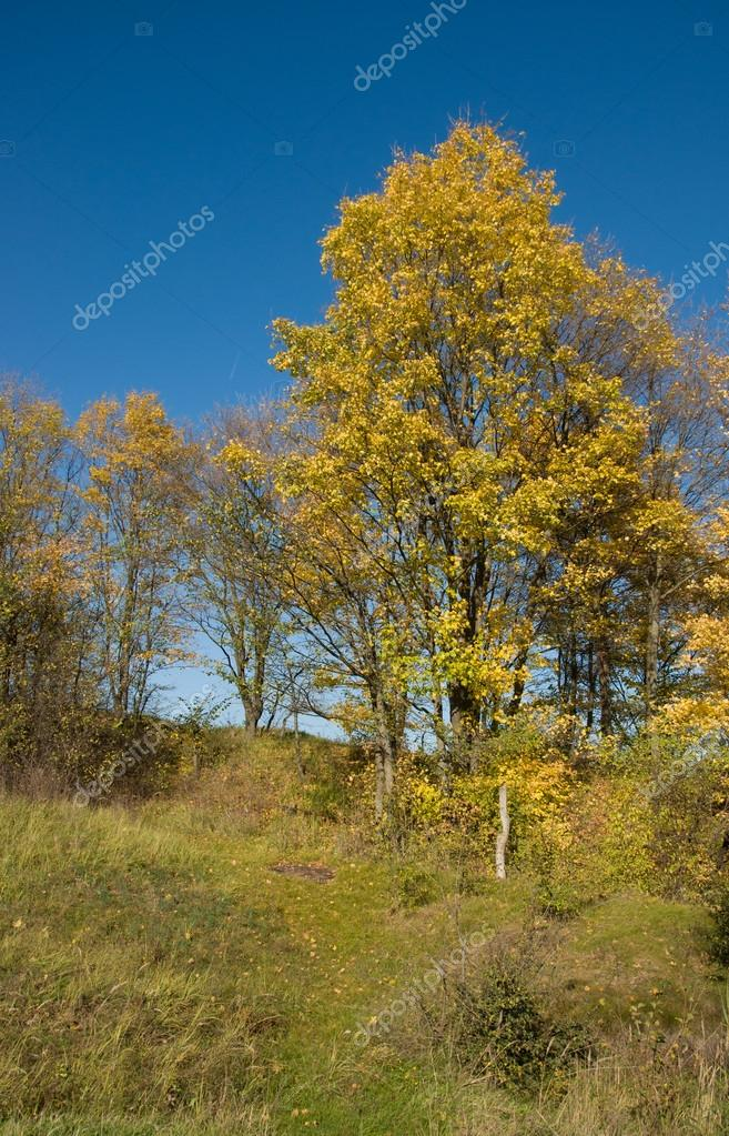 Sunny Autumn day in forest, outdoor  Stock Photo #14062256