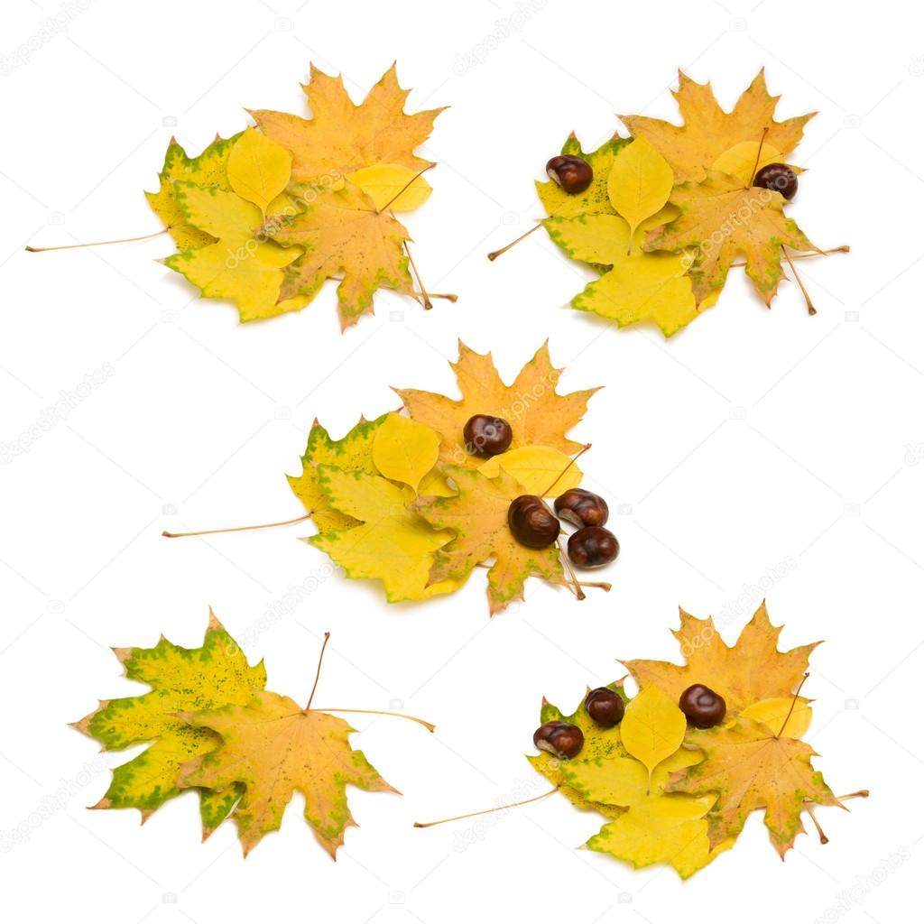 Autumn leaves and chestnuts on white background — Stock Photo #14062292