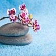 Spa stones and pink orchid on blue background — Stock Photo