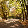 Autumn alley in a park — Stock Photo