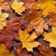 Autumn leaves background — Stock Photo #33812701
