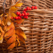 Autumn rowanberry background — Stock Photo