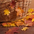 Autumn leaves and basket — Stock Photo