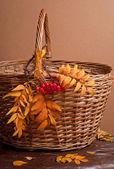 Autumn rowanberry and basket — Stock Photo