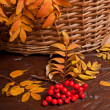 Autumn rowanberry — Stock Photo