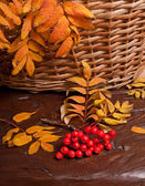 Autumn rowanberry — Foto Stock