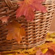 Autumn leaves and basket — Stock Photo #34101697