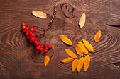 Rowanberry and leaves — Stock Photo