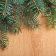 Christmas fir-tree branch — Stock Photo