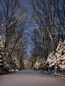 Nigt winter park — Stock Photo