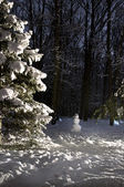 Snowman in winter forest — Stockfoto
