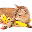 Cat and ribbons — Stock Photo