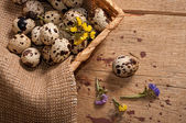 Quail eggs in basket — Stock Photo