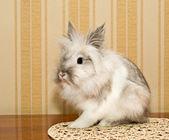 Decorative Rabbit — Stock Photo