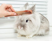 Hairstyle for rabbit — Stock Photo
