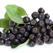 Black chokeberry — Stock Photo