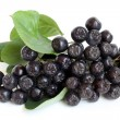 Royalty-Free Stock Photo: Black chokeberry