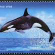 "RUSSIA - 2012: shows Killer Whale, series ""Fauna of Russia. Whales"" — Stock Photo"