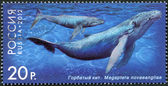 """RUSSIA - 2012: shows Humpback Whale, series """"Fauna of Russia. Whales"""" — Stockfoto"""