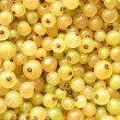 Berries of a white currant — Stock Photo #14385125