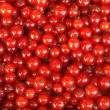 Stock Photo: Berries of red currant