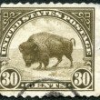 USA - 1923: shows American buffalo — Stock Photo