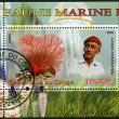 Stock Photo: CONGO - 2009: shows coral and Jacques Cousteau (1910-1997)