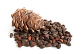 Siberian pine cone and nuts — Stock Photo