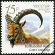 RUSSIA - 2013: shows Caucasian tur (Capra caucasica), series Fauna of Russia, Wild goats and rams — Stock Photo #20263939