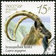 RUSSIA - 2013: shows wild goat (Capra aegagrus), series Fauna of Russia, Wild goats and rams — Stock Photo
