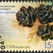 RUSSIA - 2013: shows Larch Cajanderi (Larix cajanderi), series Flora of Russia, Cones of coniferous trees and shrubs - Stock Photo
