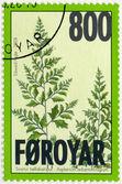 FAROE ISLANDS - 2008: shows Black spleenwort (asplenium adiantum-nigrum), series Ferns — Zdjęcie stockowe