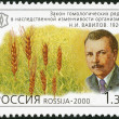 RUSSIA - 2000: shows N.I.Vavilov (1887-1943), series Russia, XX century, Science — Stock Photo