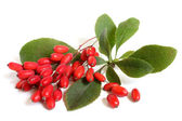 Ripe barberries on branch with green leaves — Stock Photo
