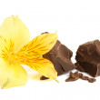 Stock Photo: Dark chocolate with flower of alstroemeria