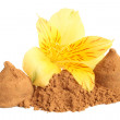 Cacao powder and chocolate sweets with flower of alstroemeria — Stock Photo